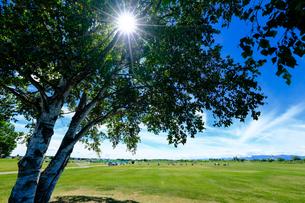 青空と木陰の写真素材 [FYI04597272]
