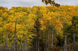 カラフルに色づいた秋の森の写真素材 [FYI04597312]