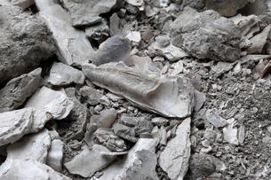 カキ貝の化石の写真素材 [FYI04597326]