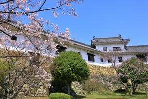 姫路城 サクラと百間廊下の写真素材 [FYI04597690]