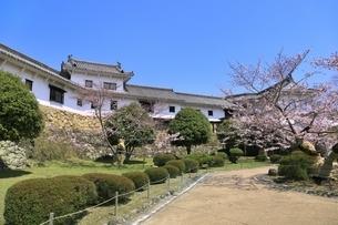 姫路城 サクラと百間廊下の写真素材 [FYI04597691]