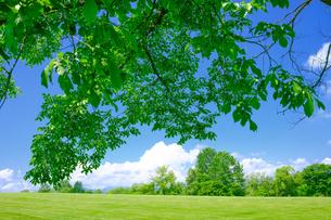 夏の風景の写真素材 [FYI04597870]