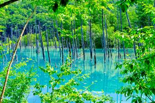 青い池の写真素材 [FYI04597872]