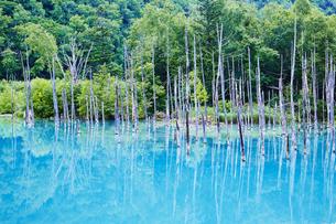 青い池、美瑛の写真素材 [FYI04597928]
