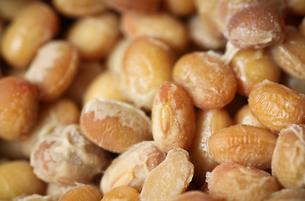納豆の製造過程において発酵中の大豆の写真素材 [FYI04598405]