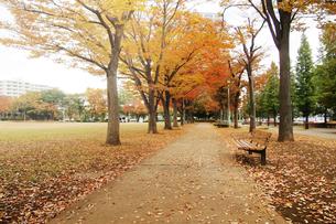 公園の秋の写真素材 [FYI04598469]