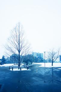 冬の公園 雪のち霙(みぞれ)の写真素材 [FYI04598505]