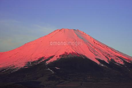 2020年3月の朝から晴れた日、三国峠を越えて山中湖方面へドライブ。途中の「パノラマ台」と言う名前の展望台から夜明け前の赤富士山を眺めることが出来ましたの写真素材 [FYI04598611]