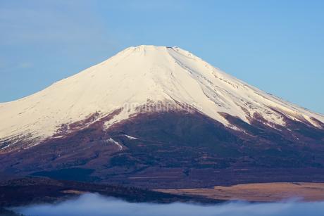 早春のパノラマ台(山中湖村)から青空を背景にした富士山を望むの写真素材 [FYI04598615]