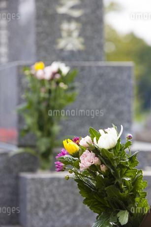 仏花とお墓の写真素材 [FYI04598771]