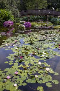 草津市立水生植物公園の写真素材 [FYI04599430]