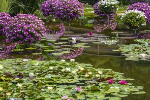 草津市立水生植物公園の写真素材 [FYI04599431]