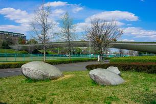 快晴の稲城中央公園で船底曲線が美しい「くじら橋」を一望の写真素材 [FYI04599514]