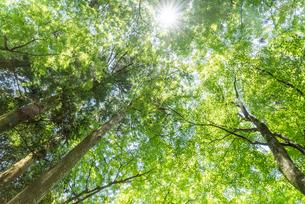 緑の森の写真素材 [FYI04599557]