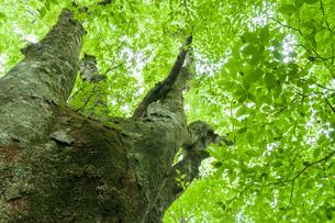 ローアングルからの緑の大木の写真素材 [FYI04599565]