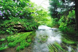 緑と清流の写真素材 [FYI04599591]