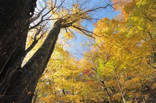 黄葉の山の風景の写真素材 [FYI04599595]