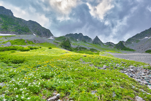 山に咲く花の写真素材 [FYI04599752]