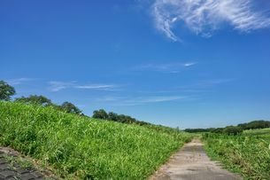 草原に伸びる道の写真素材 [FYI04599764]