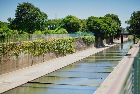 真夏の用水路の写真素材 [FYI04599772]