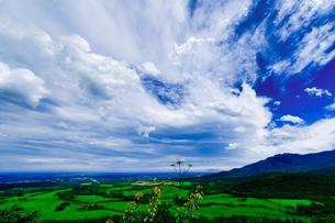 夏の空の写真素材 [FYI04599804]