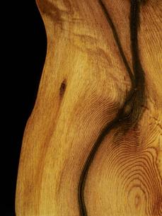 屋久杉の木目の写真素材 [FYI04600122]
