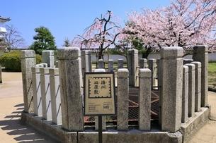 姫路城 お菊井戸とサクラの写真素材 [FYI04600352]