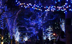 街路樹のクリスマスイルミネーションの写真素材 [FYI04600652]