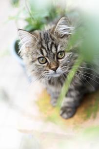 仔猫の写真素材 [FYI04600689]