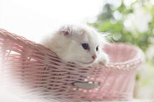 仔猫の写真素材 [FYI04600690]