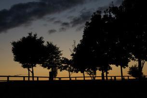 木々のシルエットが美しい夕暮れの公園の写真素材 [FYI04600948]