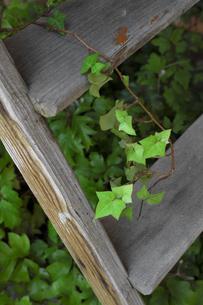 アンティークの木製の踏み台とアイビーの葉の写真素材 [FYI04601095]