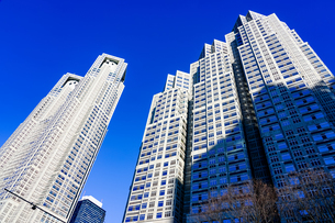 新宿中央公園前の公園通りから青空にそびえる東京都庁舎(東京都庁第一本庁舎と東京都庁第二本庁舎)の写真素材 [FYI04601173]