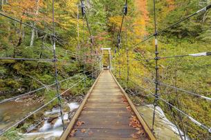 三本滝へと向かう途中にある吊り橋と小大野川 長野県松本市の写真素材 [FYI04601353]