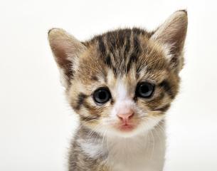 子猫の顔の写真素材 [FYI04601473]