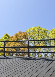 新緑の若葉とベランダの写真素材 [FYI04601505]
