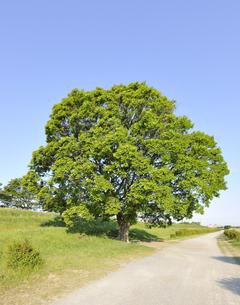 多摩川河川敷の遊歩道と大木の写真素材 [FYI04601513]
