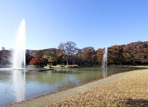 紅葉の代々木公園の写真素材 [FYI04601515]