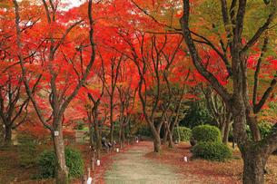 11月 紅葉の京都植物園の写真素材 [FYI04601726]