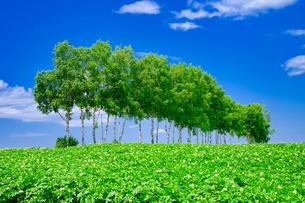 美瑛町の風景の写真素材 [FYI04601944]