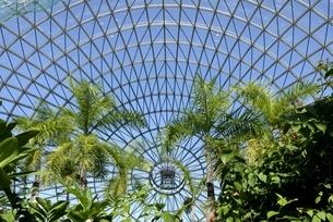 とっとり花回廊,フラワードームの写真素材 [FYI04601971]