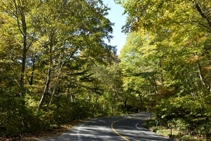 紅葉の大山環状道路の写真素材 [FYI04602014]