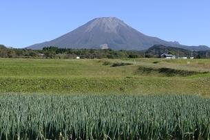 青空の大山とネギ栽培の写真素材 [FYI04602069]