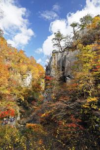 秋の鳴子峡 宮城県の写真素材 [FYI04602176]