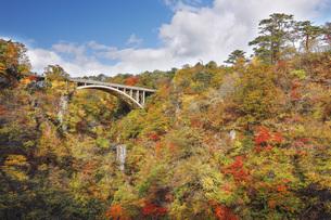秋の鳴子峡 宮城県の写真素材 [FYI04602182]