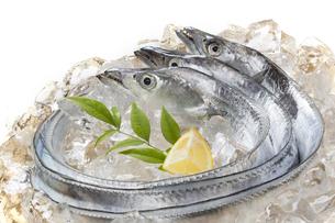 太刀魚の写真素材 [FYI04602307]