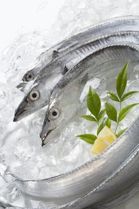 太刀魚の写真素材 [FYI04602308]