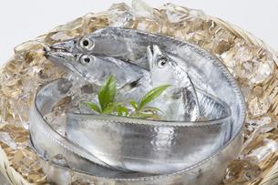 太刀魚の写真素材 [FYI04602310]