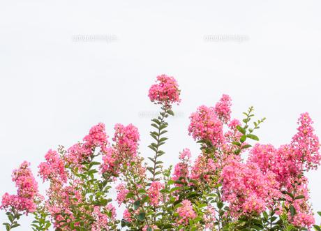 花 背景素材の写真素材 [FYI04602475]