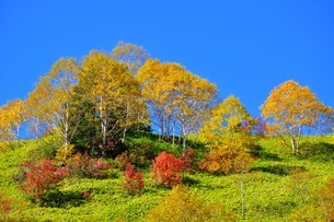 紅葉の焼山の写真素材 [FYI04602575]